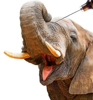 Elefante colpito