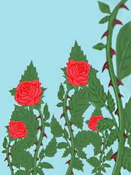 Spine e rose