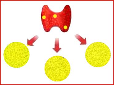 La tiroide e le tre ghiandole ormonali