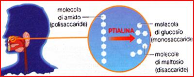 Ptialina