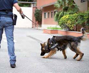 cane poliziotto 2