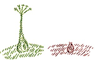 Bulbo vegetale e umano