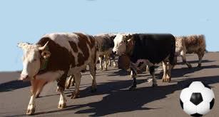 Il mercato delle vacche