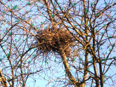 Albero con nido