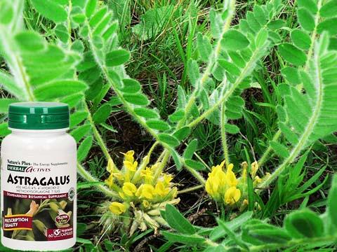 Astragalus excapus