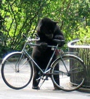 Bicicletta trovata