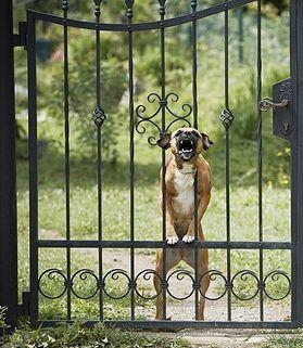 Cane che abbaia al cancello