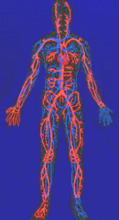 Circolazione sanguigna