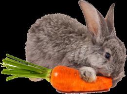 Coniglio e carota