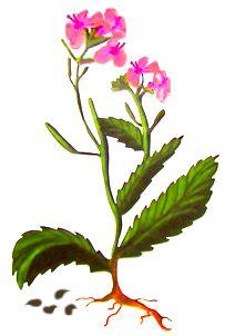 Dal seme al fiore