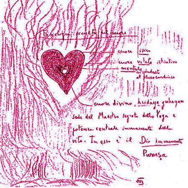 Fisiologia occulta del cuore