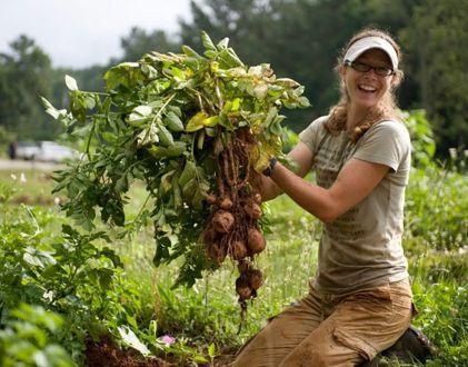 Giovani in agricoltura