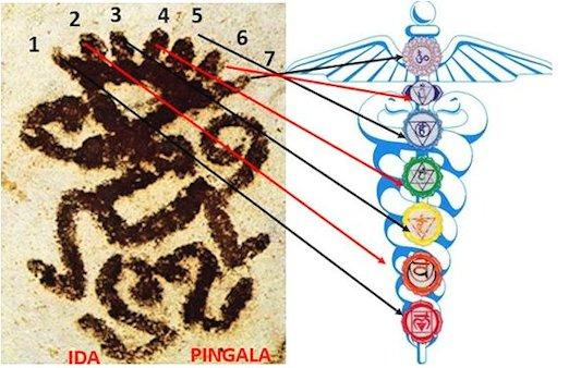Ida e Pingala con i sette chakra nel pittogramma dello sciamano vivente