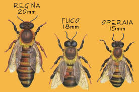 I tre tipi di api