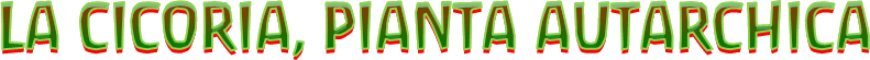 La cicoria, pianta autarchica