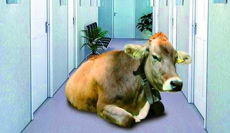 La mucca in corridoio