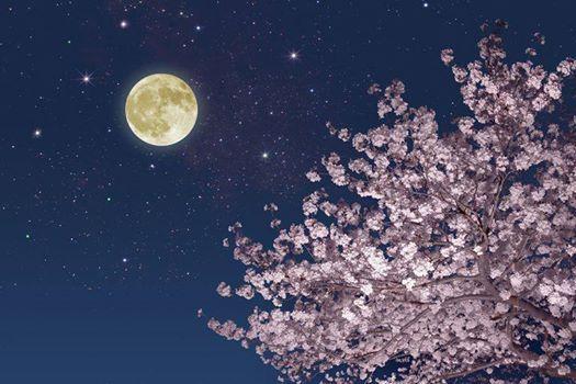 Luna piena di primavera