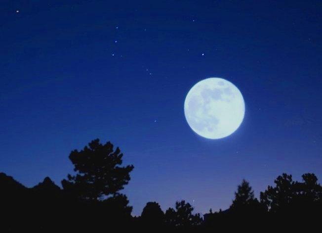 Luna sugli alberi