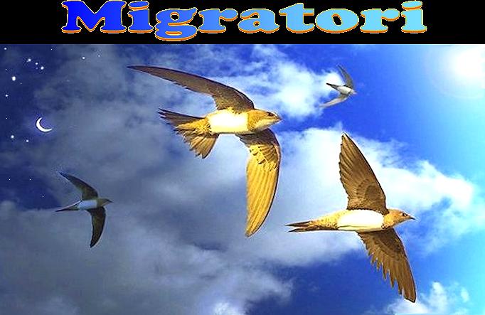 Migratori