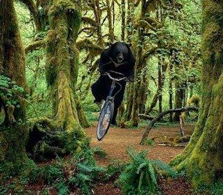 Orso in bici nel bosco