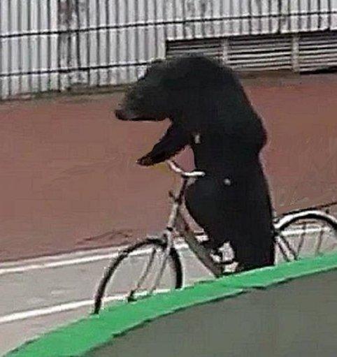 Orso in bici