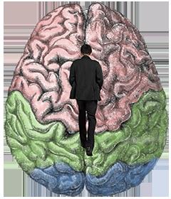 Passeggiare sul cervello