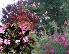 Rose e fiori di vetro