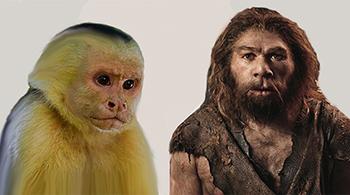 Scimmia e uomo selvaggio