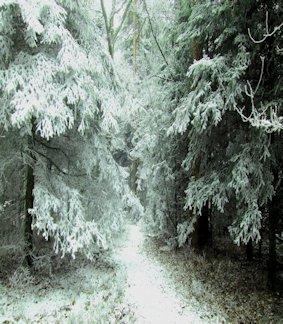 Sentiero nella foresta innevata