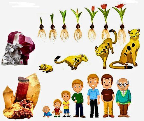 Sviluppo minerale pianta animale uomo