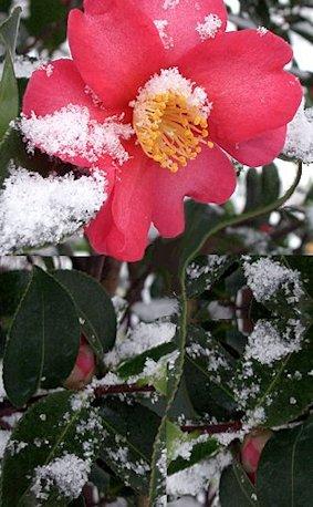 fioritura a dicembre