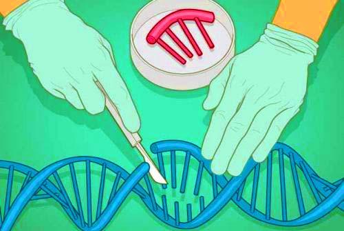 manipolazione genetica