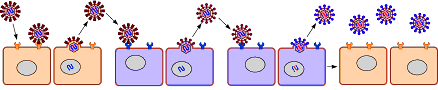 virus ricombinante